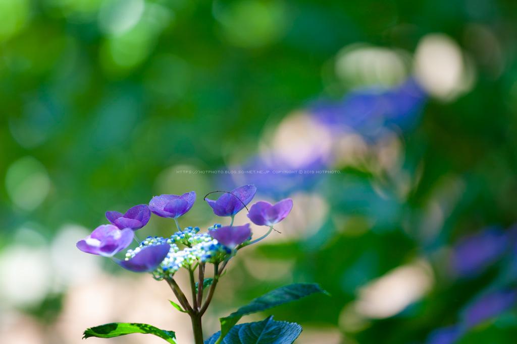 hotphoto2_190623_05.jpg