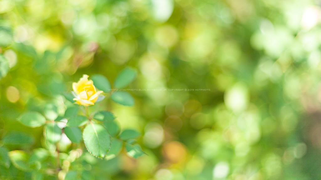 hotphoto2_190825_01.jpg