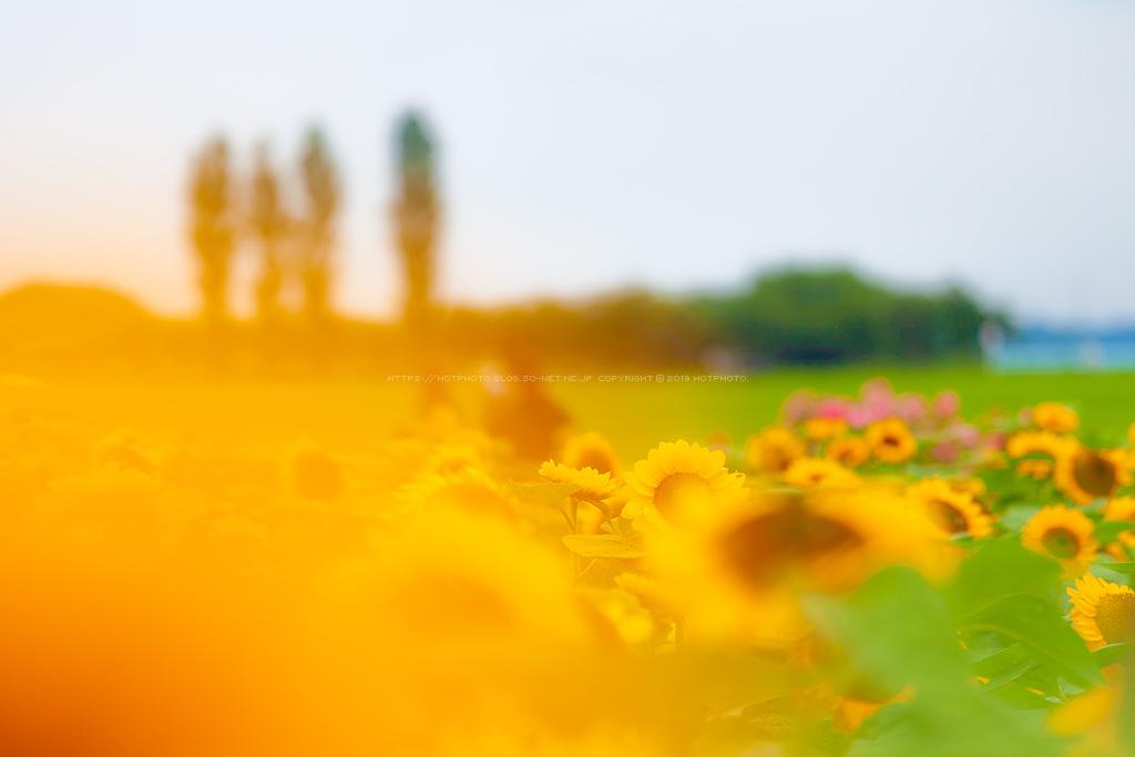 hotphoto_190720_05.jpg