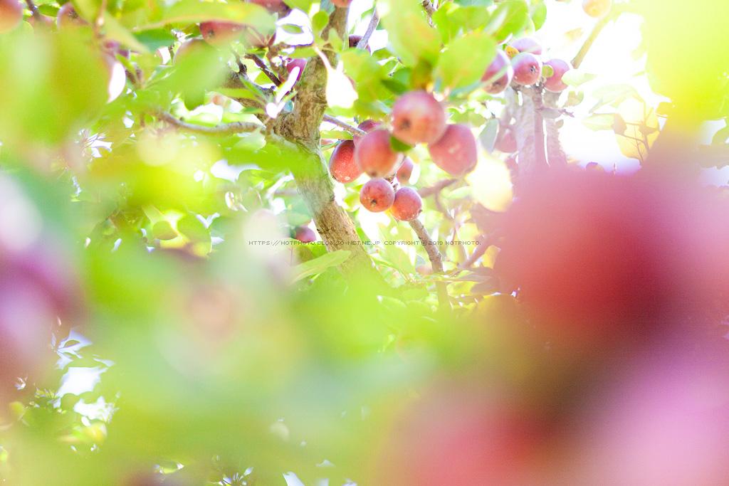 hotphoto_190727_08.jpg